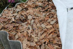 Сухая листва как утеплитель